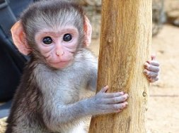 Vervet Monkey Rehabilitation
