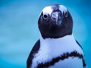 African Penguin and Seabird Rehabilitation