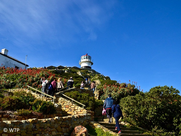 Cape Point has two lighthouses. The first lighthouse is stationed at the top of the funicular and was commissioned on 1 May 1860. Unfortunately, built too high to be effective when mist rolled in, the beacon failed to save many ships.