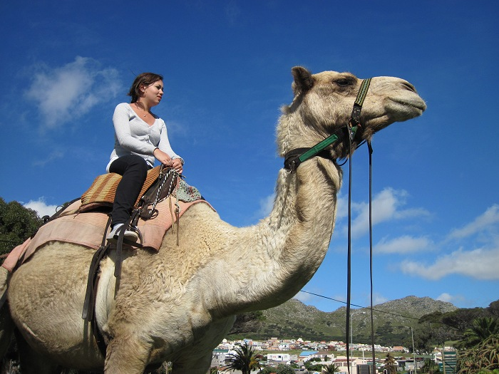 Imhoff Farm is the only destination around Cape Town where you have the opportunity to ride a camel.