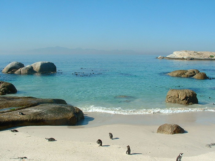 Boulders beach is  made up of inlets between granite boulders and is home to many penguins.