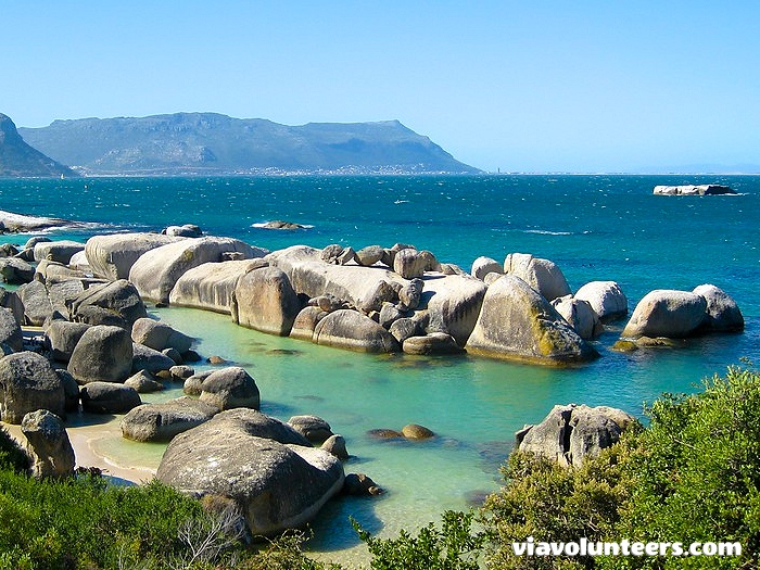 Boulders Beach is a lovely sheltered beach made up of inlets between granite boulders, from which the name originated.