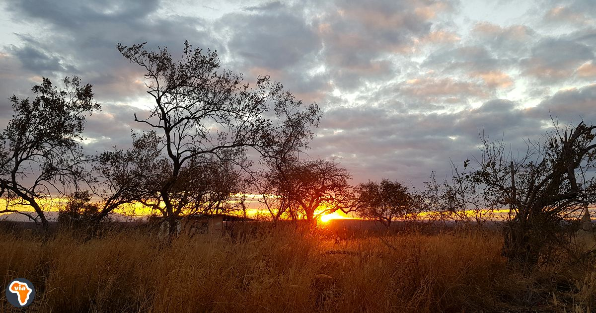 Volunteer ethically and contribute to wildlife conservation in South Africa's Greater Kruger National Park.