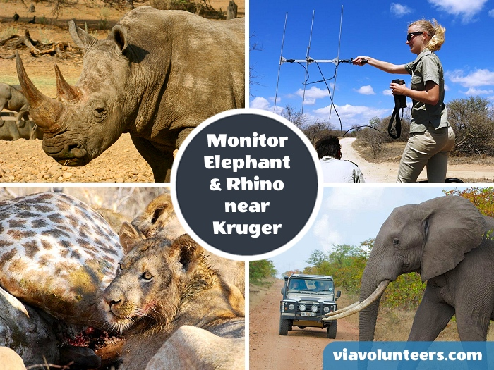 Join a dedicated team of conservationists for a rich African wildlife experience, focusing on monitoring Elephants and Rhino in the Greater Kruger National Park.