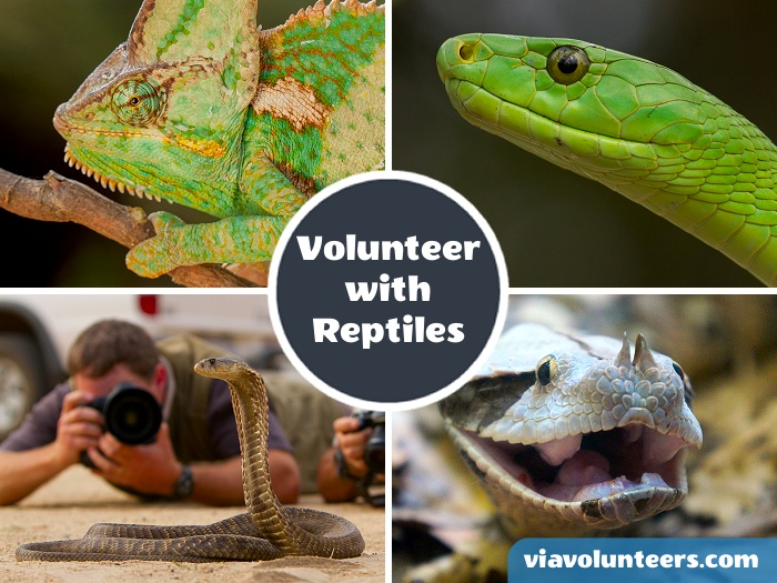 Work with a wide variety of snakes and other reptiles at a unique facility near Kruger National Park dedicated to the conservation of reptiles.