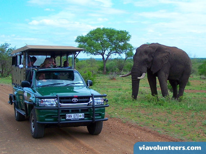 Your expert guides will make sure you get plenty of opportunities for memorable photos in Kruger.