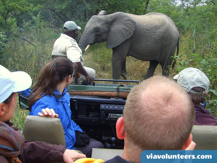 Encounter African wildlife on a game drive in Kruger Ntional Park.