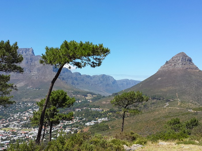 Lion's Head: In the 17th century the peak was known as Leeuwen Kop (Lion's Head) by the Dutch, and Signal Hill was known as Leeuwen Staart (Lion's Tail), as the shape resembles a crouching lion or a sphinx.