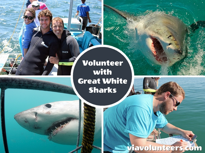 Work closely with a team of shark-specialist marine biologists, enjoy shark cage diving, and experience a wide range of South African marine wildlife.