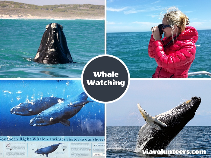 Whale watching between June and November. We have some of the best land based whale watching in the world with hotspots all along the coastline around Cape Town.