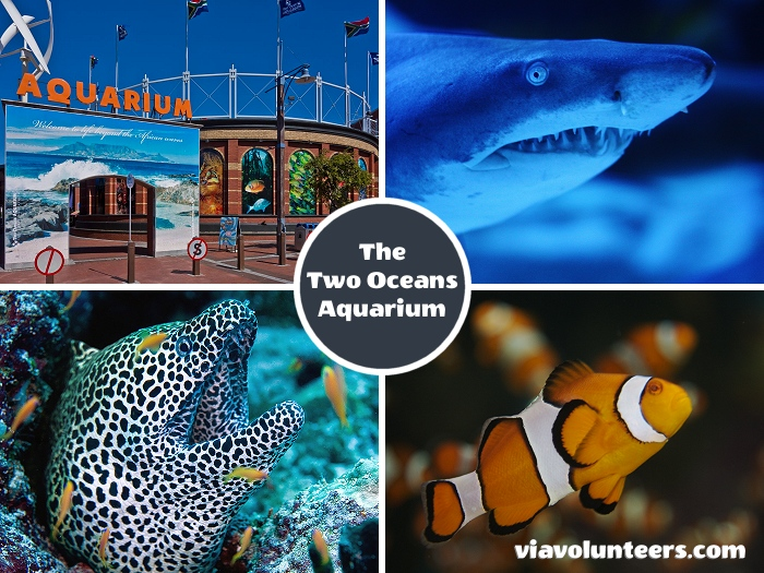 With more than 3000 marine creatures on view - including sharks, turtles and penguins - the Two Oceans Aquarium is one of the finest aquariums in the world.