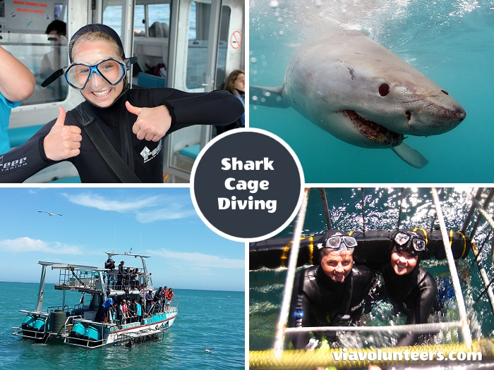 Spend time looking Great White Sharks in the eye from the safety of the cage, and watch them from above, while you're on deck.