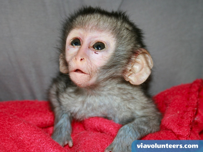 Cute little monkey needing some love! Why not volunteer abroad with Via Volunteers in South Africa during your gap year abroad and have lots of fun  while doing good!