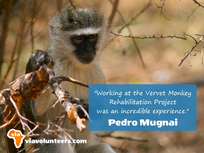 Volunteer Review - Pedro volunteered at the Vervet Monkey Rehabilitation Project in South Africa.