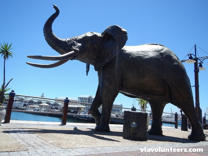 Elephant sculpture at the V&A Waterfront.