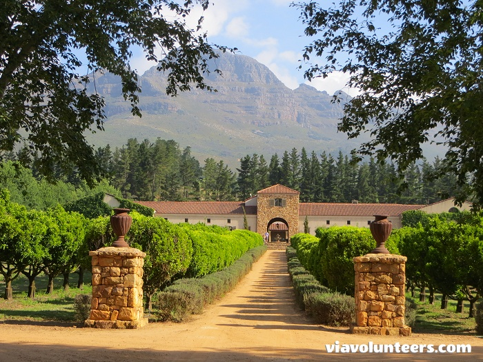 Nestled in the picturesque Blaauwklippen Valley, in the world-renowned Stellenbosch region, Waterford Wine Estate (wine and chocolate tasting) boasts ancient citrus groves, rolling lawns, water features and fragrant lavender beds.