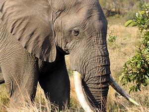 Elephant and Rhino Monitoring Project
